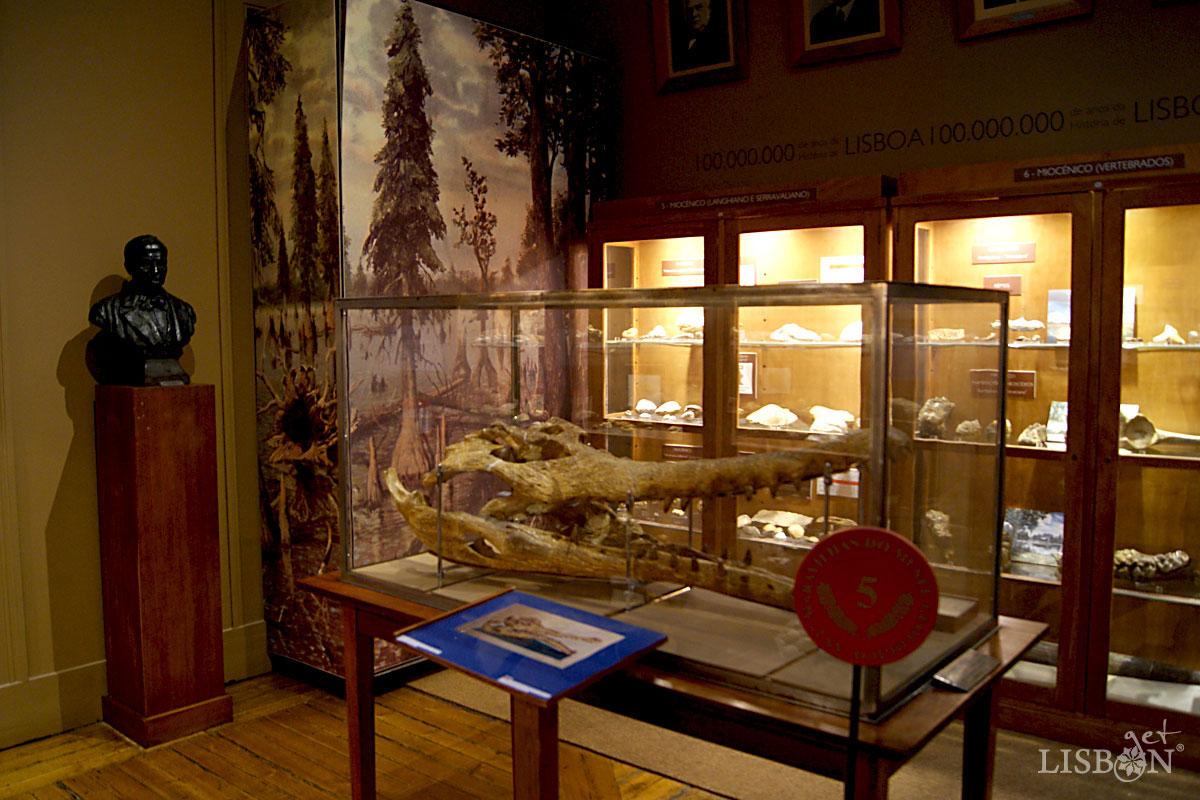 Sala da Geologia de Lisboa, Museu Geológico, Lisboa