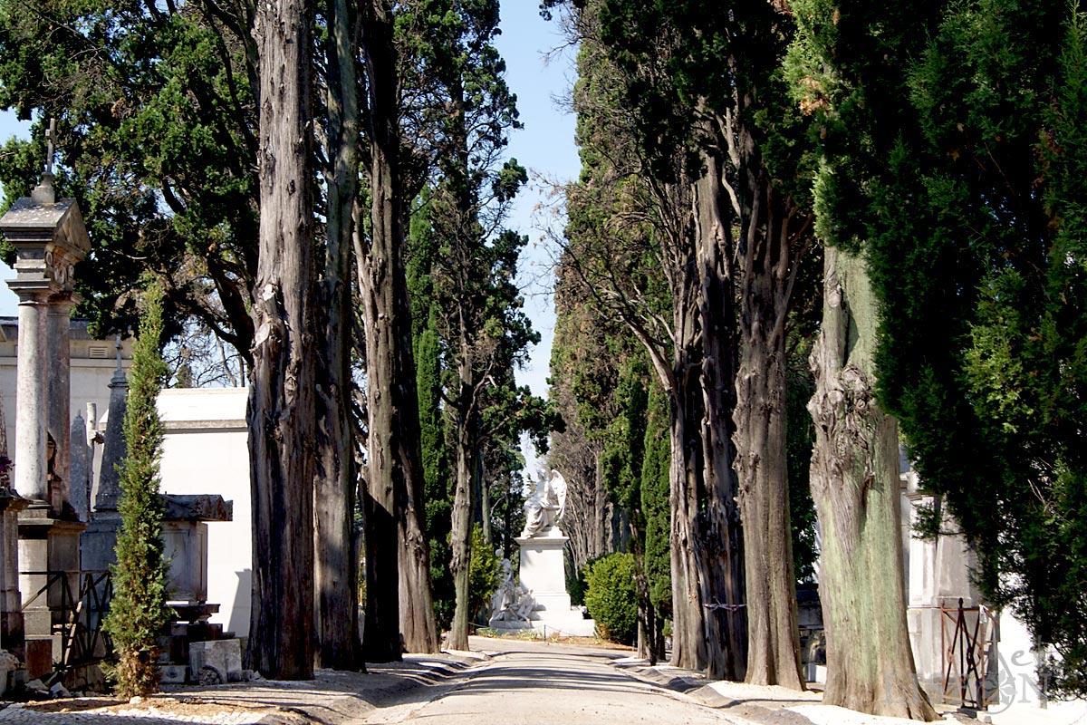 Cemitério Histórico: Alameda de Ciprestes no Cemitério dos Prazeres