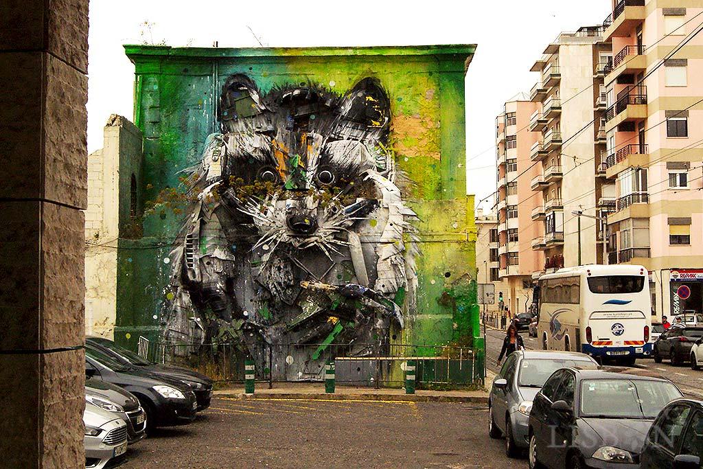 Big Raccoon, Belém